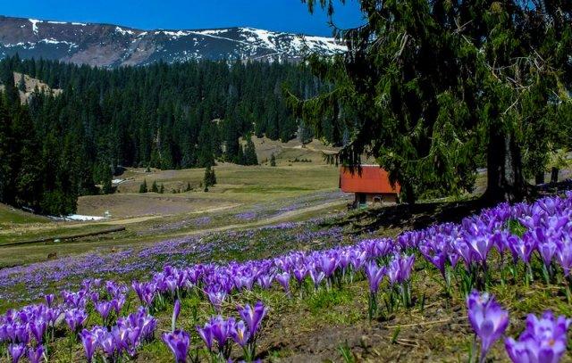 Tavasz a Pádis fennsíkon
